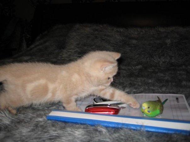 Jaga..jaga kucing tu nak makan burung tu!