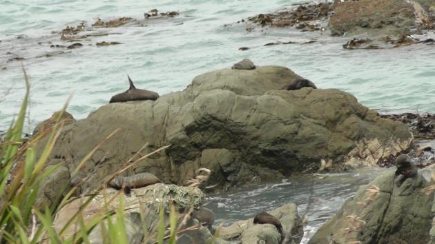 Wild Seal.. ( anjing laut ke singa laut ek ) diambil dari keretapi yang kami naiki, dia ada open air coach.. boleh layan permandangan...